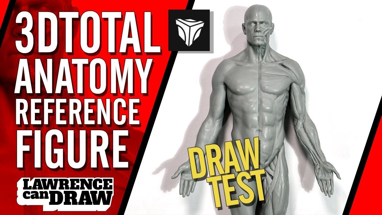 3dtotal Anatomy Figure Review For Digital Artists Youtube