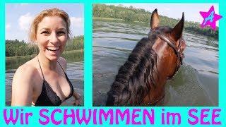 SCHWIMMEN mit Canto, Anja & Solido I Pferde Sommer I Ausritt zum SEE