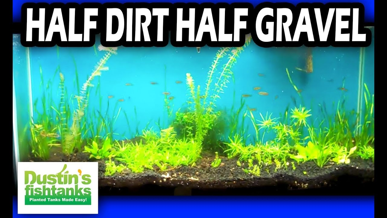 Planted tank substrate the dirt difference in the planted for Dustins fish tanks