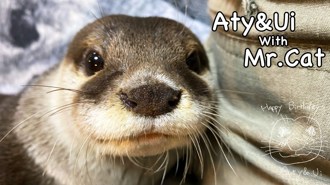 [Live Streaming] Let's chat while watching otters. 【ライブ配信】川で遊んだ後のカワウソたちを眺めながら雑談でも