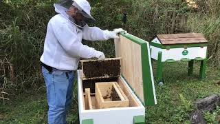 Friends of the Bee Rescue March 2019