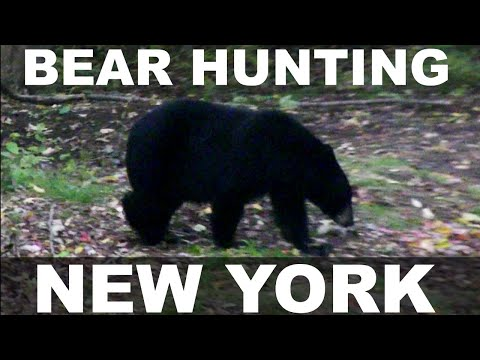 Bear Hunting In Beartown, NY: Rusty's First Bear