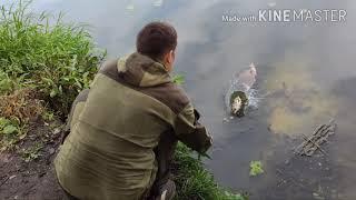 Выпускаю улов пойманный на Чижовском водохранилище