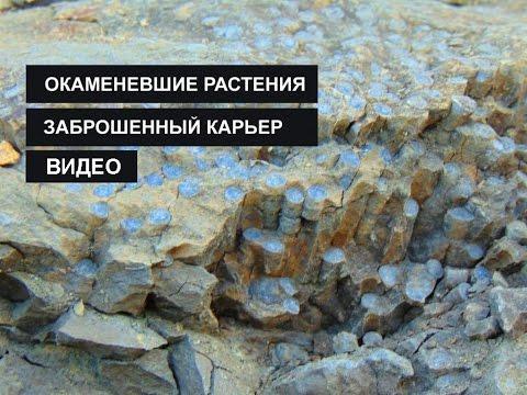 Каменные деревья