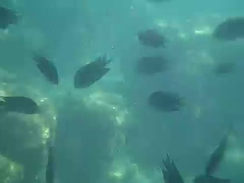 Underwater Footage of Pandan, Island in Palawan, Philippines