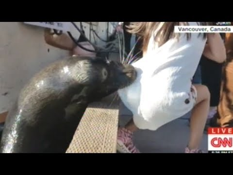 Sea Lion Snatches Little Girl Off Dock In Vancouver BC!
