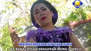 Download lagu Sri Asih - Kacu Kuning [OFFICIAL]