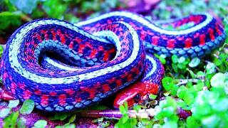 UNUSUAL COLORED ANIMALS You Won't Believe Are Real