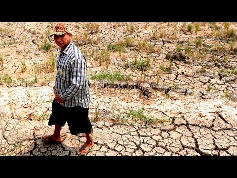 El Niño is Creating a Global Rice Shortage