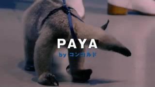 静岡県で放送されている、パチンコ店・コンコルドのCM「悪を食うパヤ」