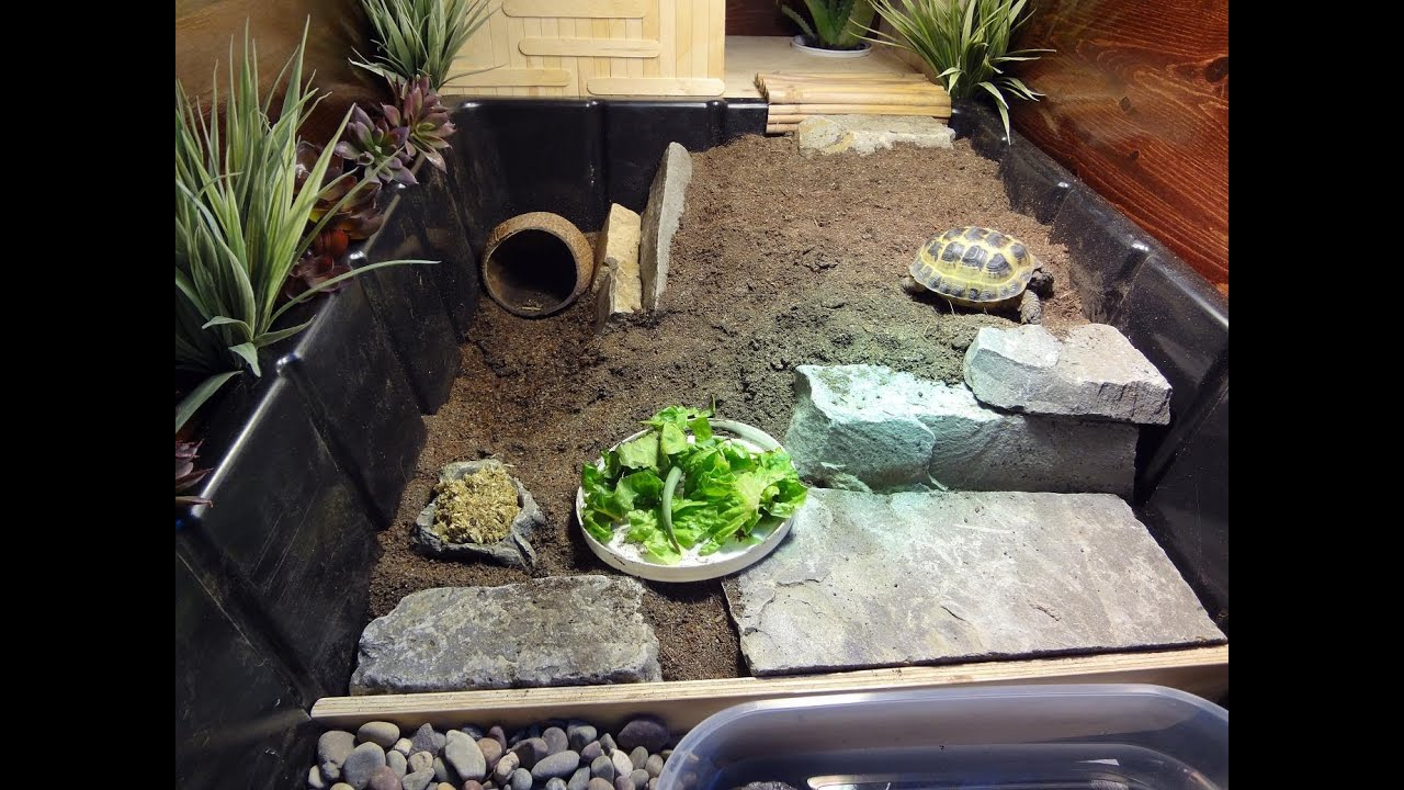 new tortoise table for russian tortoise   youtube