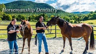horsemanship dentistry geoff tucker dvm hand floating horse teeth w no power drills or sedation