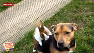 секс кролика с собакой смотреть до конца