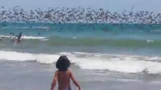 Безумная охота пеликанов на рыбу шокировала туристов   http   vk com sasisa ru