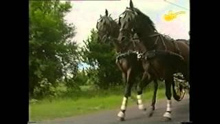 Jagodne Horses - WOT w Stadninie Janów Podlaski