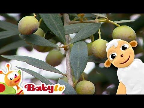 Olives   Baby Farmer   BabyTV