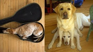 Cute is Not Enough - Funny Cats and Dogs Compilation #170