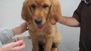 Local veterinarian discusses heartworms