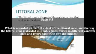 Littoral zone Top # 12 Facts