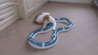 Cat Playing With Catit Design Senses Super Roller Circuit | 4K Ultra Hd