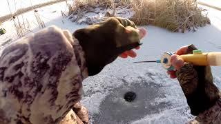 Рыбалка на Ротана Новосибирская область Колыванский район оставил координаты озера крупный Ротан