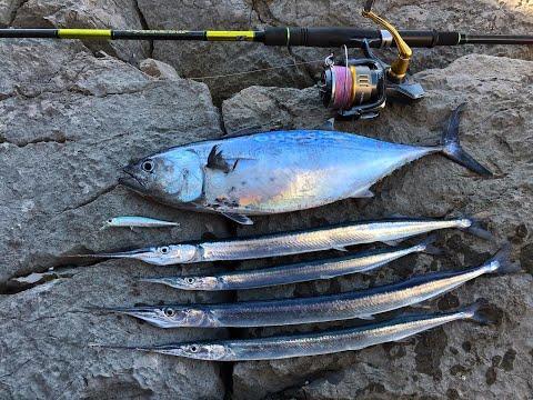 Needlefish And False Albacore On Duo Realis 80SP
