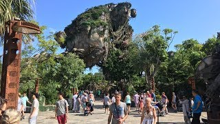 Animal Kingdom | Walt Disney World Vlog October 2018