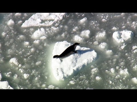Canada's 2013 Baby Seal Slaughter Begins