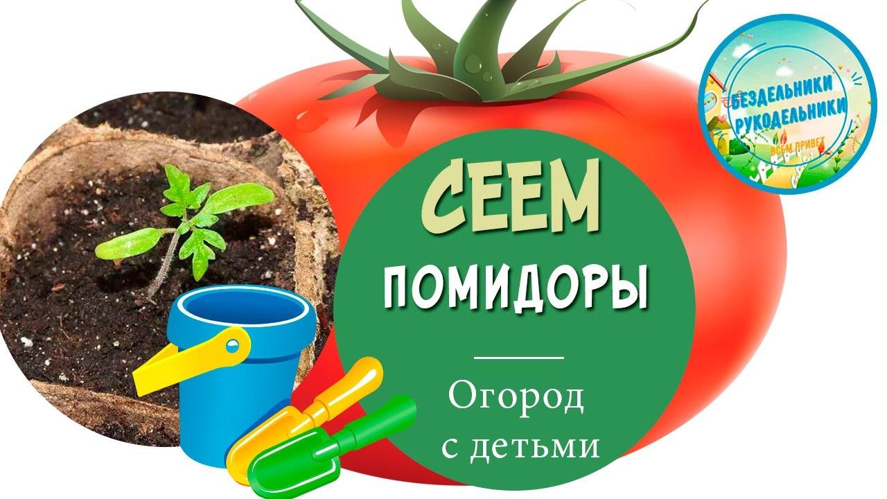 Сеем семена томатов в торфяные горшки
