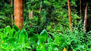 Get To Sleep Fast - Best Amazon Rainforest Relaxation. Jungle Chillout Concentrate (Part 1)