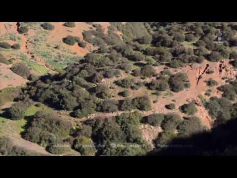 Chasse Sanglier Au Maroc   Hunting Wild Boar   season 2016 2017
