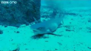 HILARIOUS sharks singing jaws ( voice over ) BBC.mp4