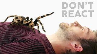 Don't React!
