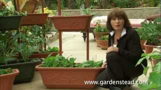 Growing Bok Choy In Containers From Gardenstead