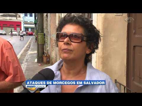 """Band Cidade """"Ataques de morcegos em Salvador"""""""