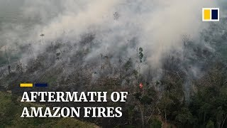 The aftermath of Amazon rainforest fires