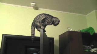 Spider Cat (Кот-Паук)