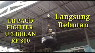 JADI REBUTAN. LB PAUD FIGHTER RP 300 RIBU