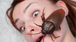 Roach On My Face - JoJoKree