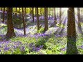 Peaceful Relaxing Instrumental Music, Calm Meditation Music