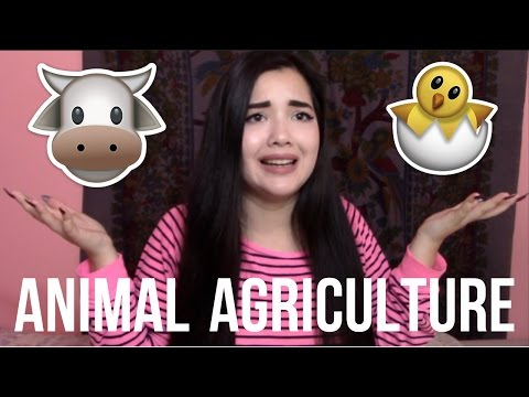 IS ANIMAL AGRICULTURE DESTROYING THE EARTH?