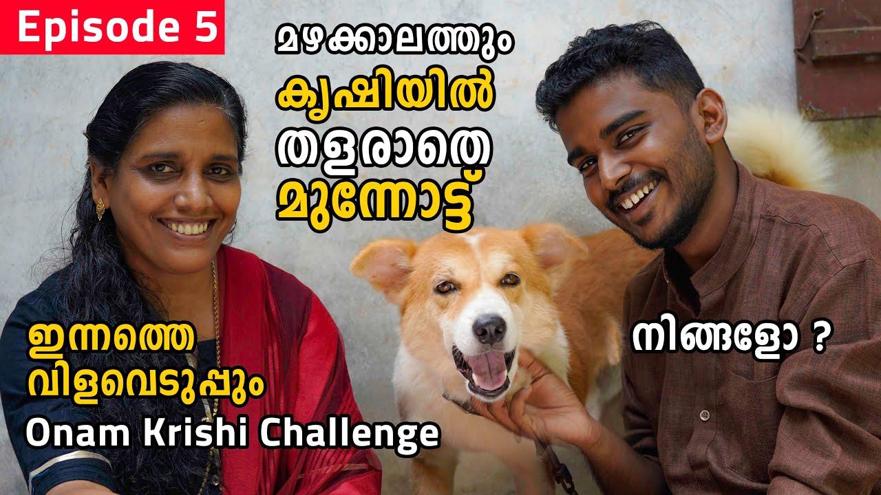 മഴക്കാലത്തും കൃഷിയിൽ തളരാതെ മുന്നോട്ട് | Onam Krishi Challenge