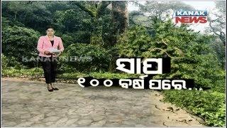 Damdar Khabar: Rare Snake Discovered After 113 Years In Odisha