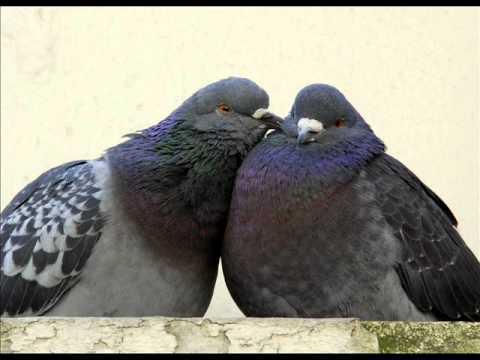 LA FONTAINE, Jean de - Les deux pigeons.