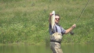 Рыбалка нахлыстом. Жерех 1.6кг