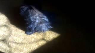 Мокрая киска (Wet pussy)
