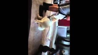 Doggy hump