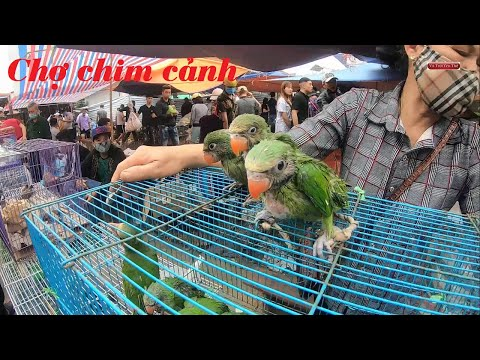 Phiên chợ bán các loại chim cảnh đẹp quý hiếm   Foci