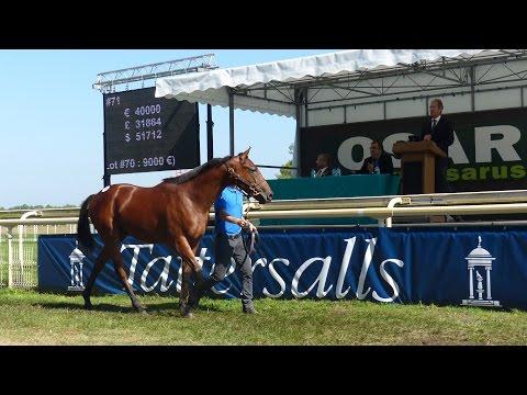 Ventes Osarus - breeze up et chevaux à l'entrainement