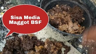 KOMPOS SISA MEDIA MAGGOT BSF ( lalat black soldier fly)